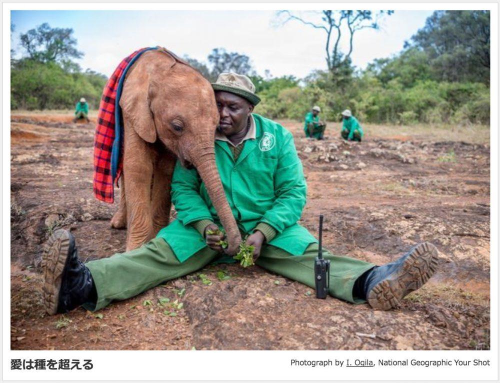I. OGILAさんの「愛は種を超える」ナショナルジオグラフィック協会の英語サイト「Your Shot」